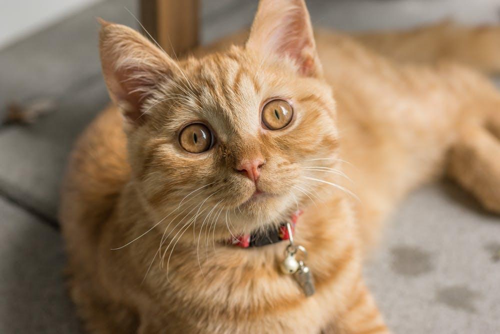 Cat pexels-photo-599492.jpeg