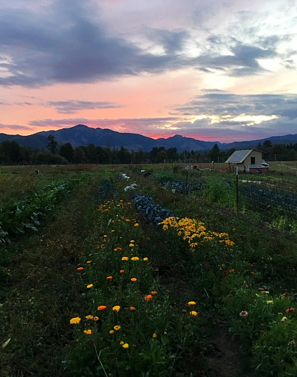 The sun is setting earlier and earlier - on the equinox it will set directly behind South Mountain - lined up perfectly with our East-West rows.