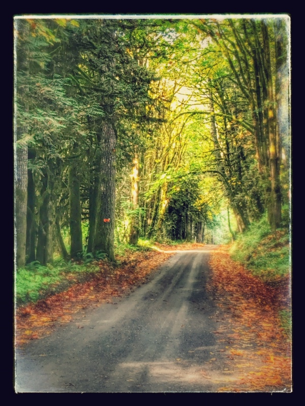 Late September last year on Sunnyside Road on the way to the farm.