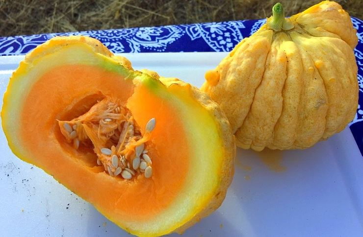 Precott Fond Blanc Melon - try eating them with a splash of lemon juice or a sprinkle of salt for an extra dash of flavor