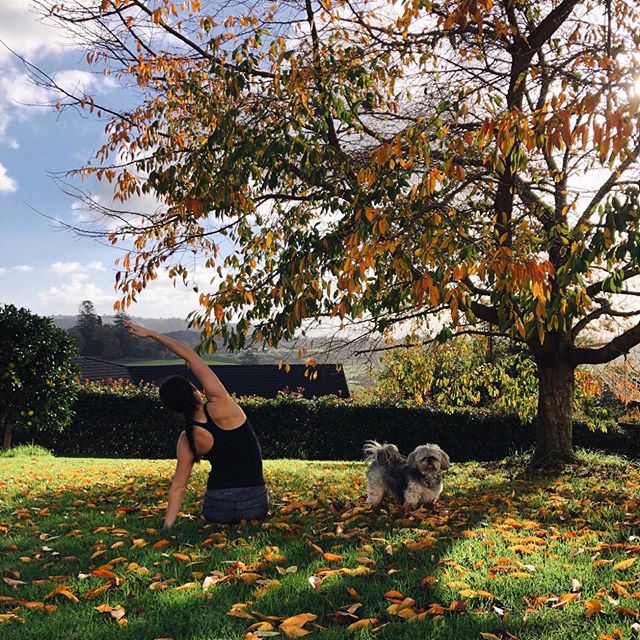 For every change in season we can adapt our yoga practice to keep us in balance 〰️ ⠀⠀⠀⠀⠀⠀ A sense of instability and anxiousness are very common during the time of Autumn 🍂 The focus for each practice at Yoga & You has been on grounding postures, soothing breath work and calming meditations ✨  We wish you all a safe and enjoyable long weekend!