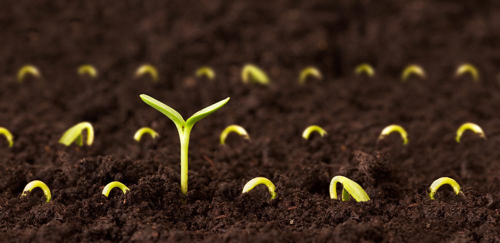 new-seeds.jpg