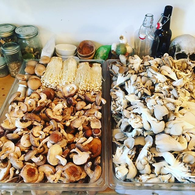 Good golly! 18 lbs of mushrooms to be consumed by the luckiest high schoolers in Chicago! #mushroombox #mushrooms