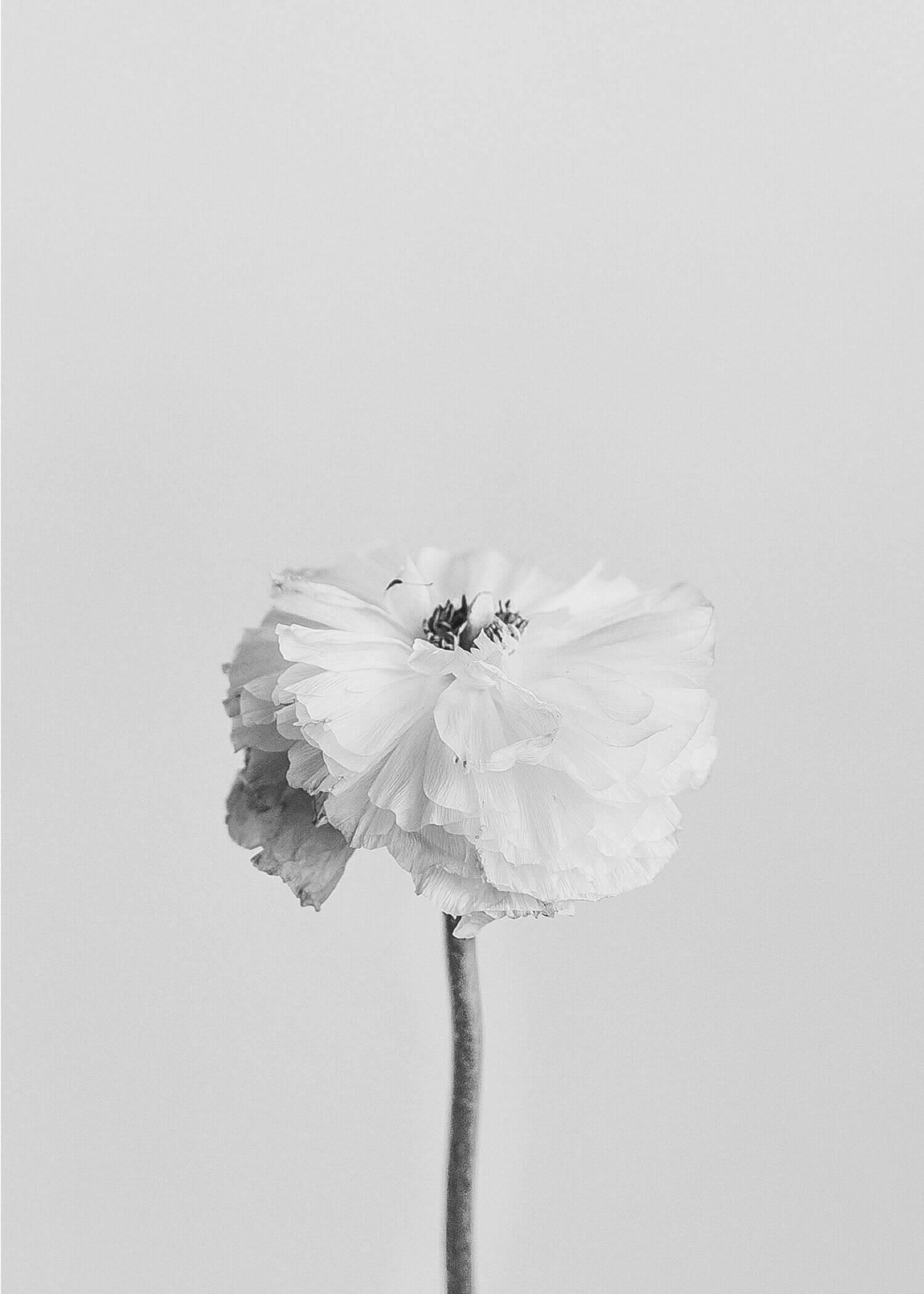 MeganDallaCamina-Home-Gallery-1.jpg