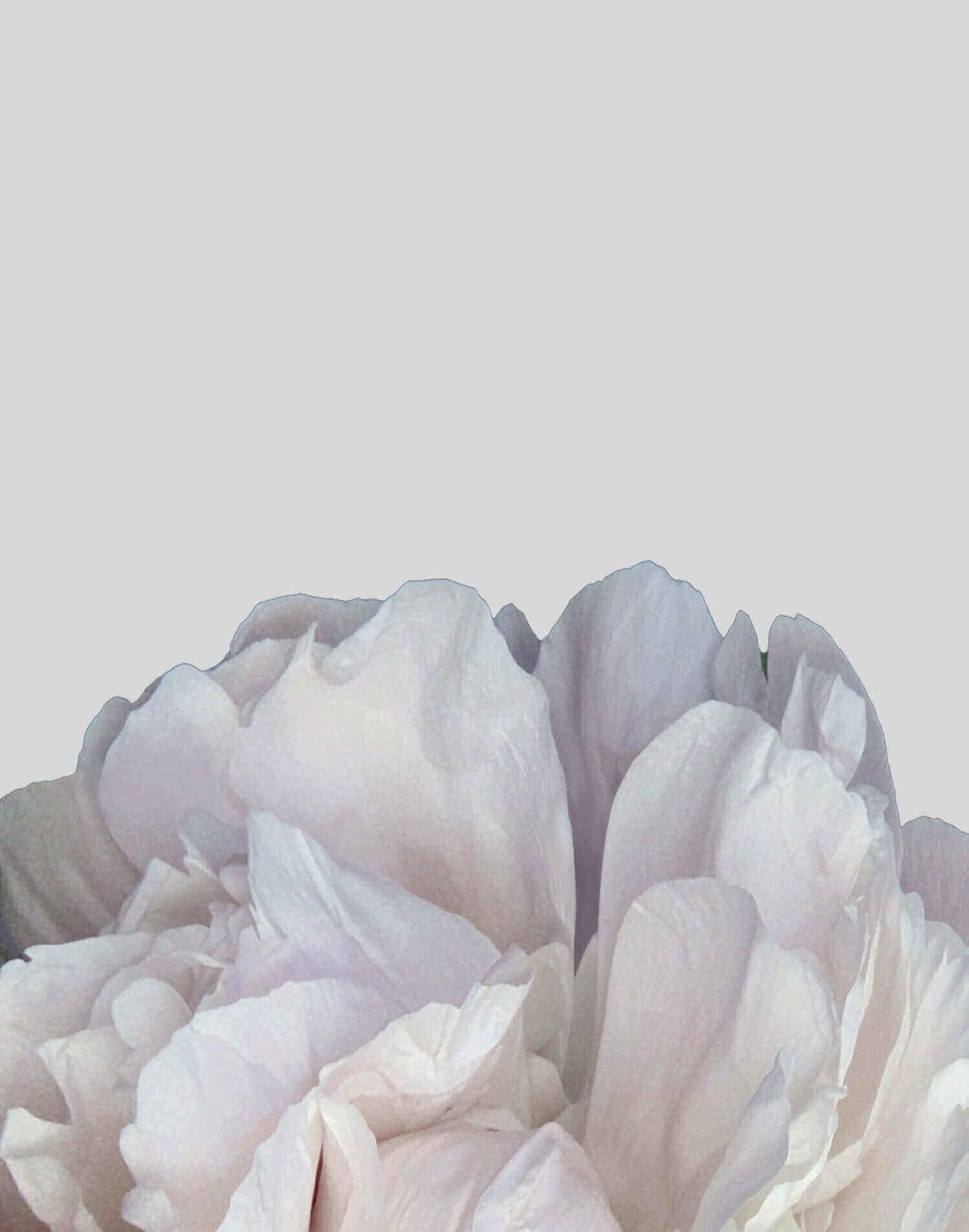 MeganDallaCamina-WorkWithMe-Gallery-5.jpg