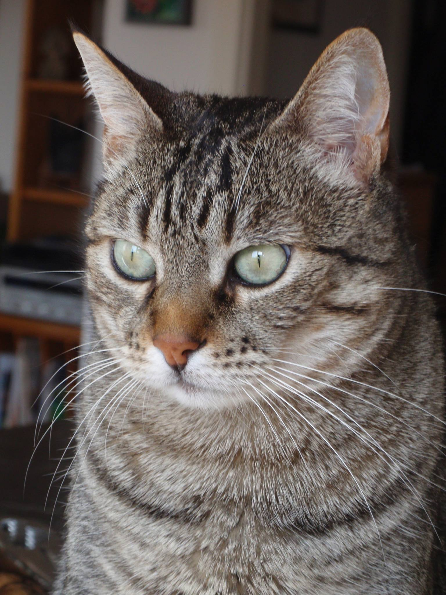 Animal healing - Wisdom in the eyes of kitty
