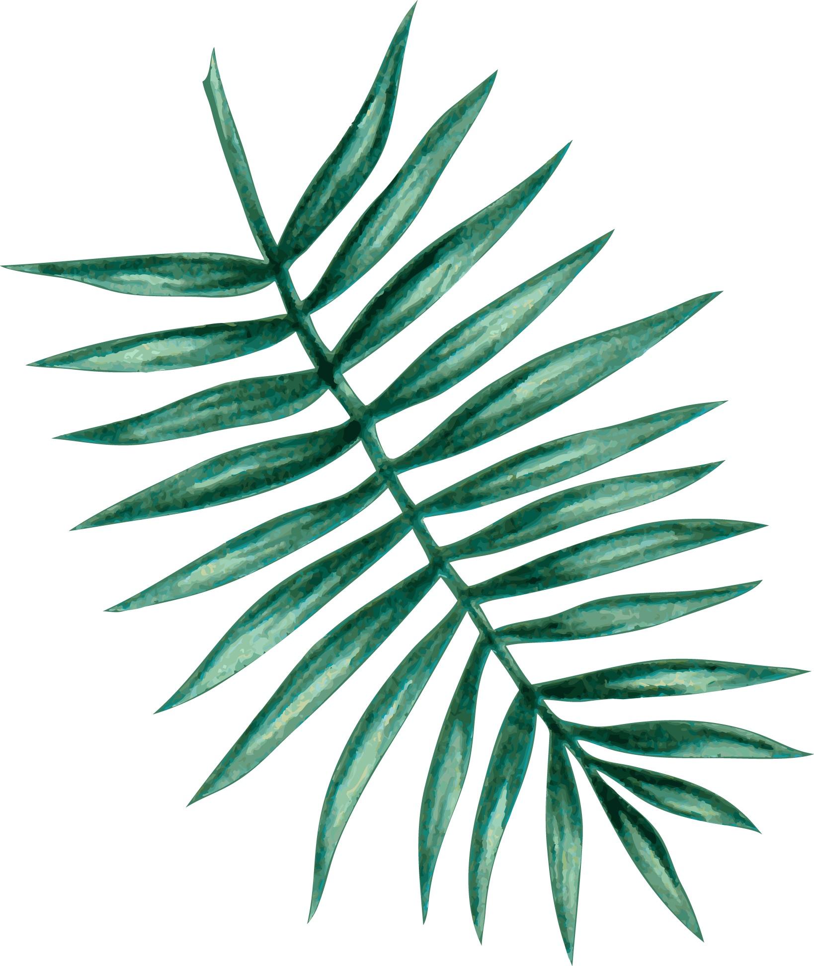 palm05.jpg