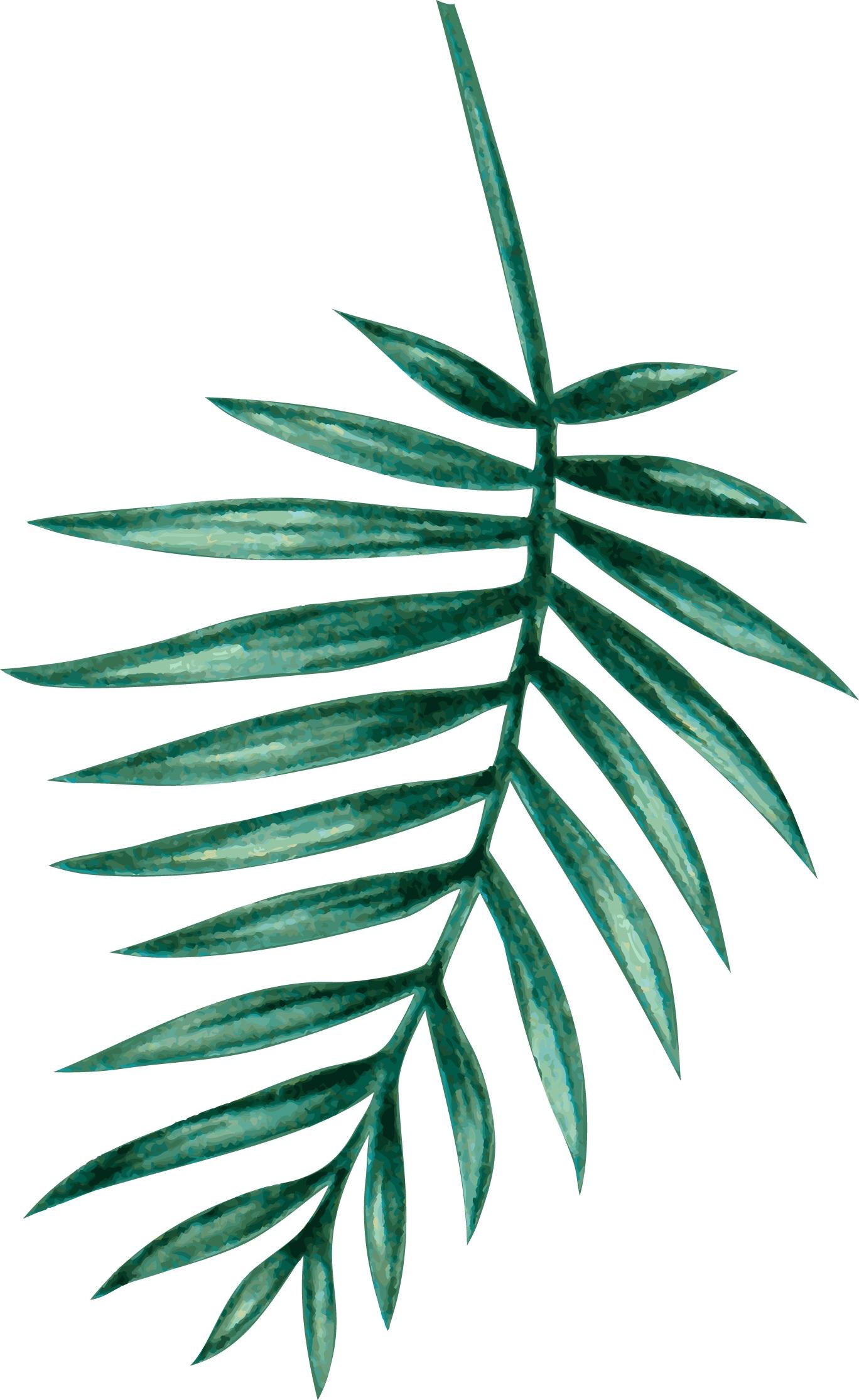 palm06.jpg
