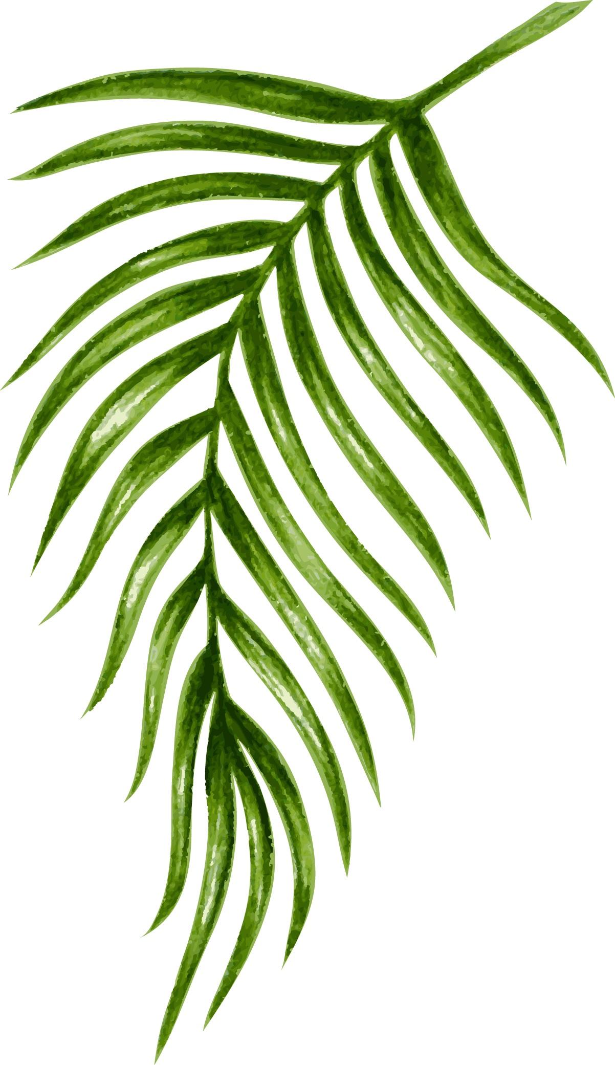 palm04.jpg