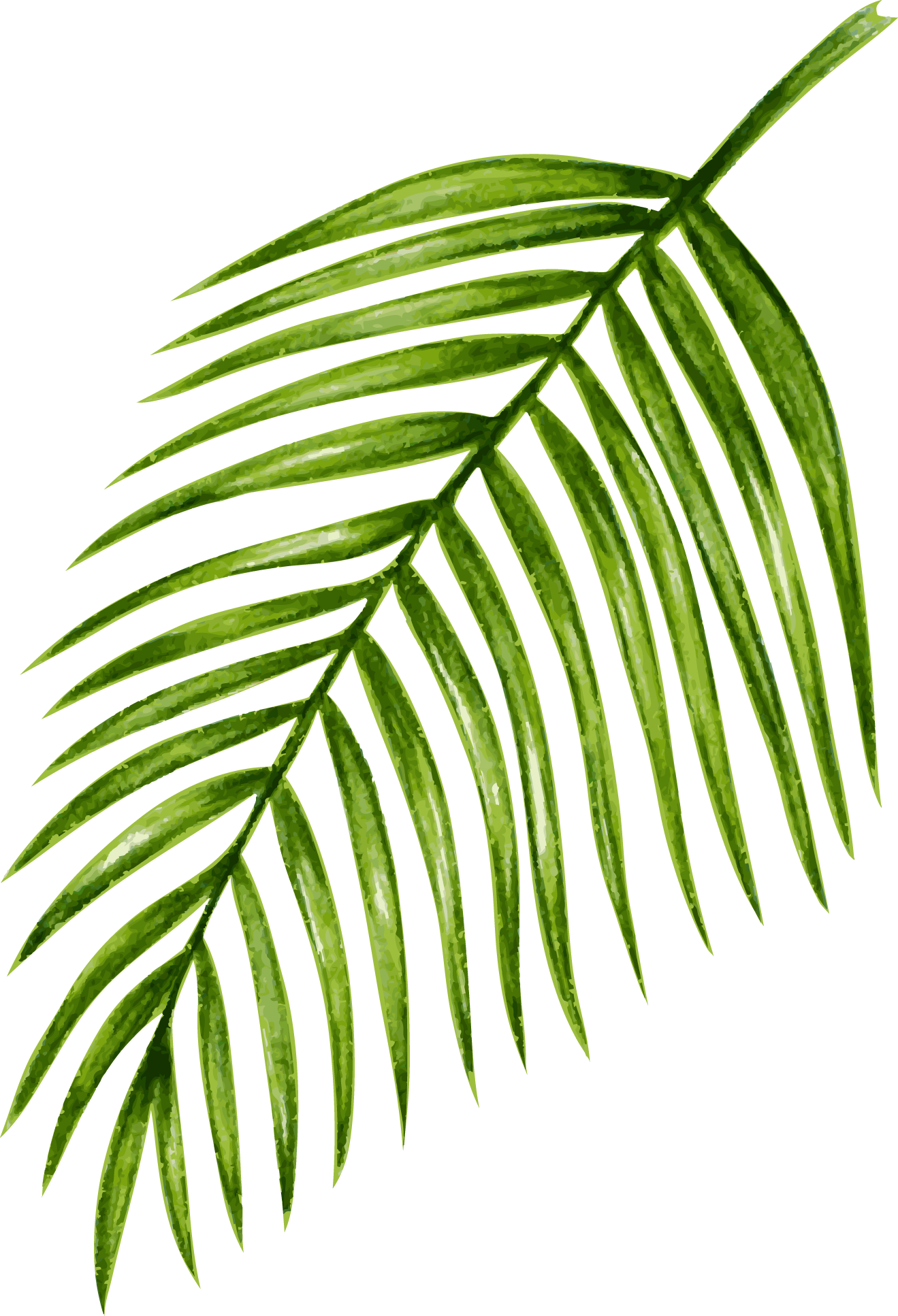 palm03.png