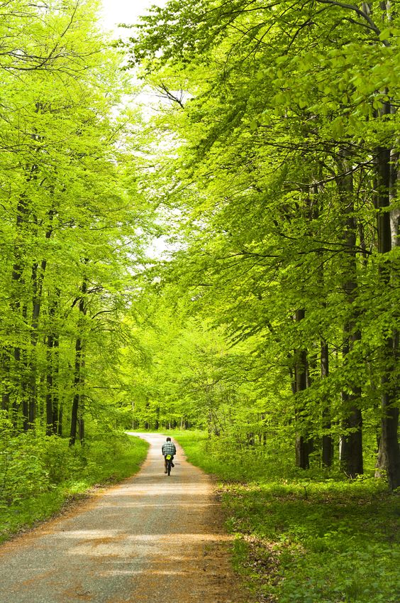 Find your own path. Lead yourself. Be happy and stay strong. Stay in the green.