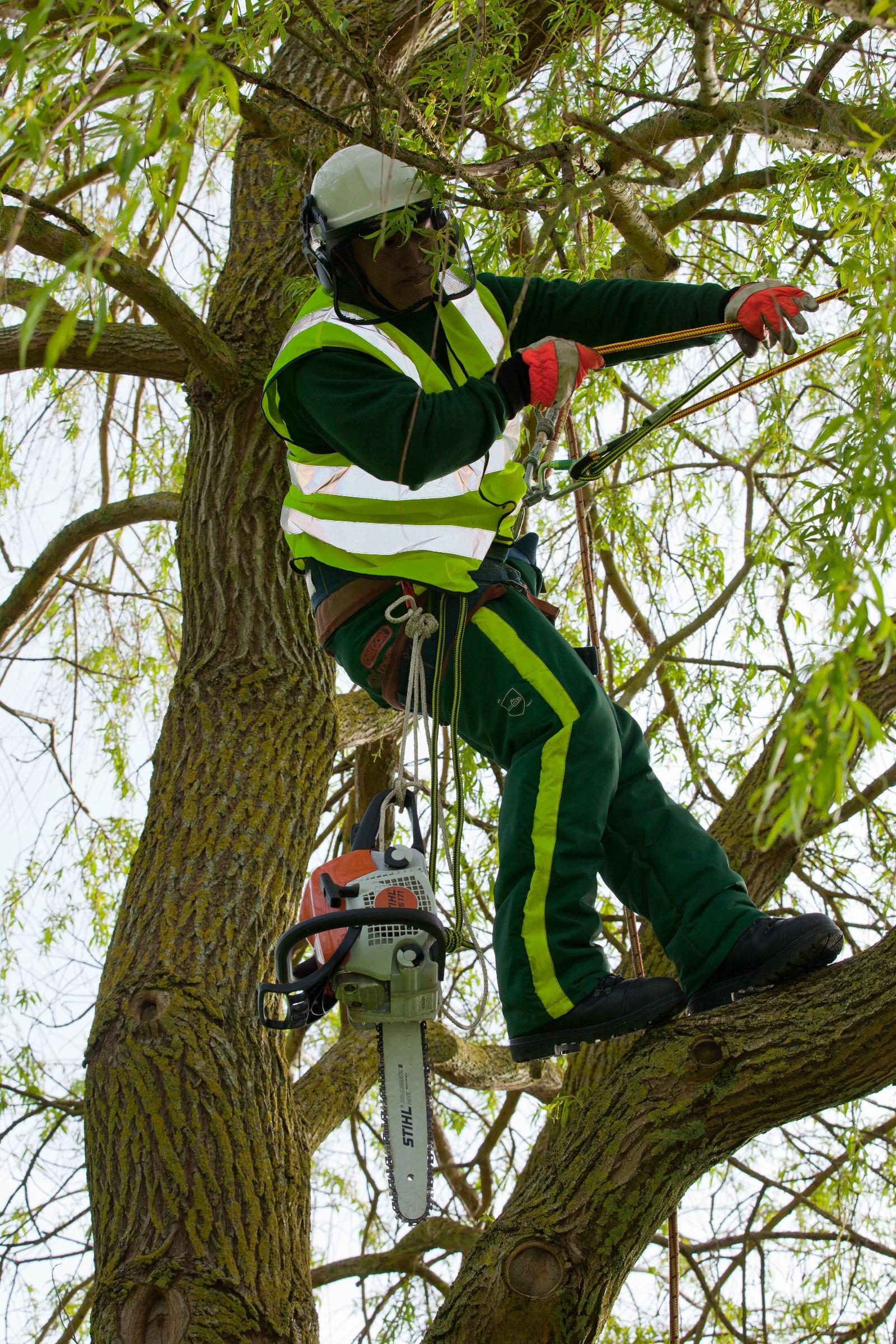 Tree-surgery-tree-felling-pruning-crown-lifting.JPG