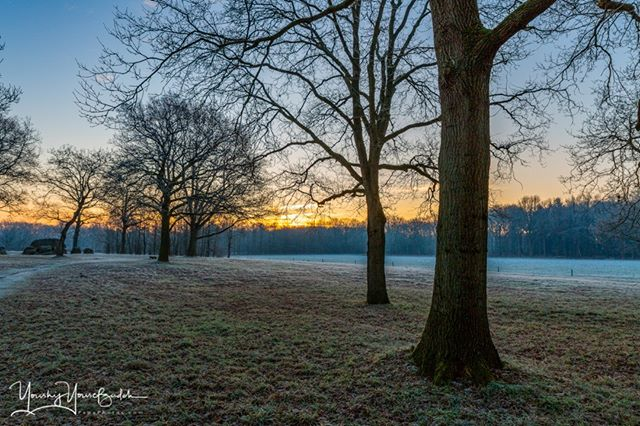 sunrise, december, travel destination, german village, landscape, low angle view, leafless trees, ground level, peaceful, europe, season, scenery, natural, sunny day, sun rays, bright sun, golden hour, nature, countryside, cold, frost, picturesque, germany, outdoor, numb, early winter, weather, dawn, orchard, beautiful, morning, frozen grass