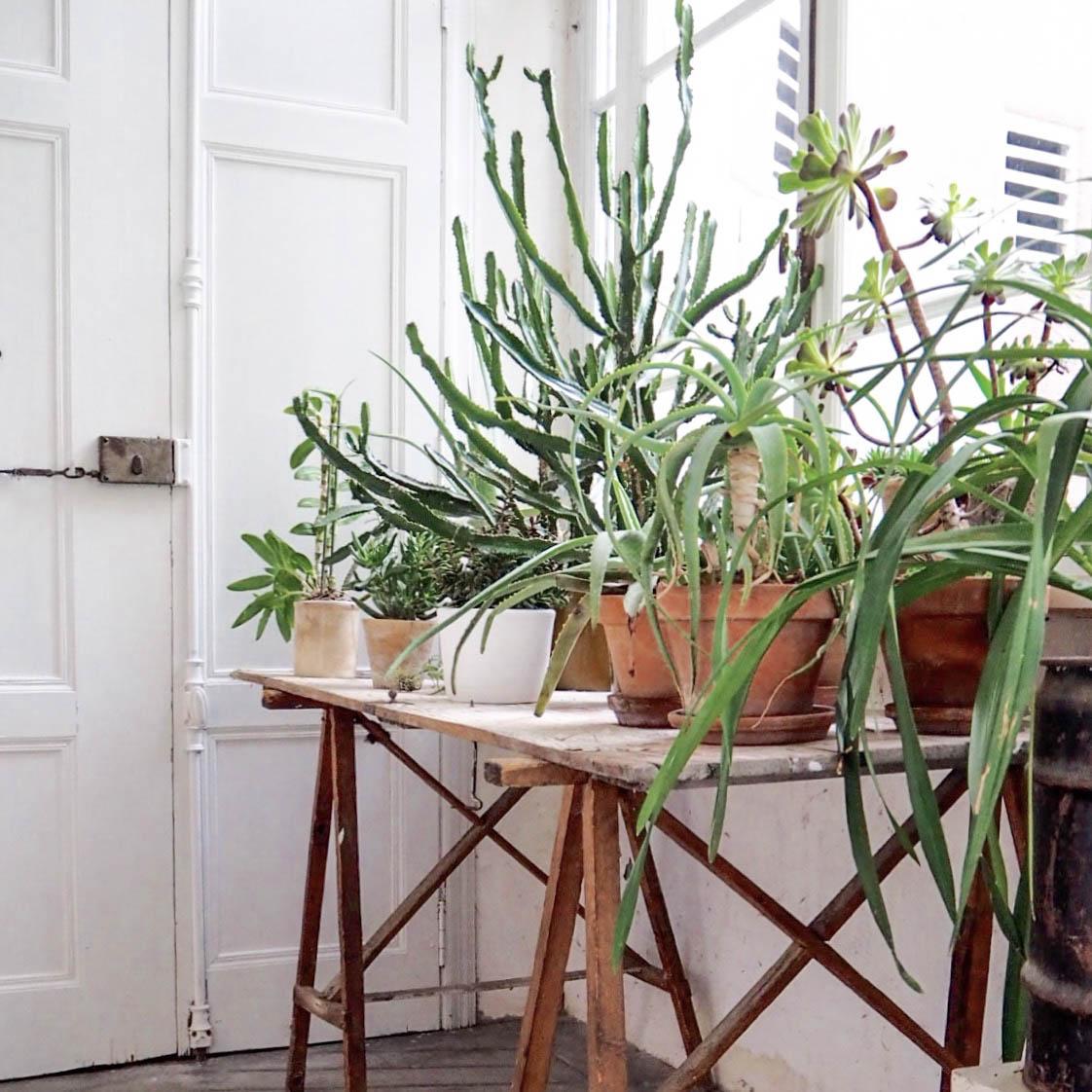 camellas-lloret-maison-d'hotes-entry-plants.jpg