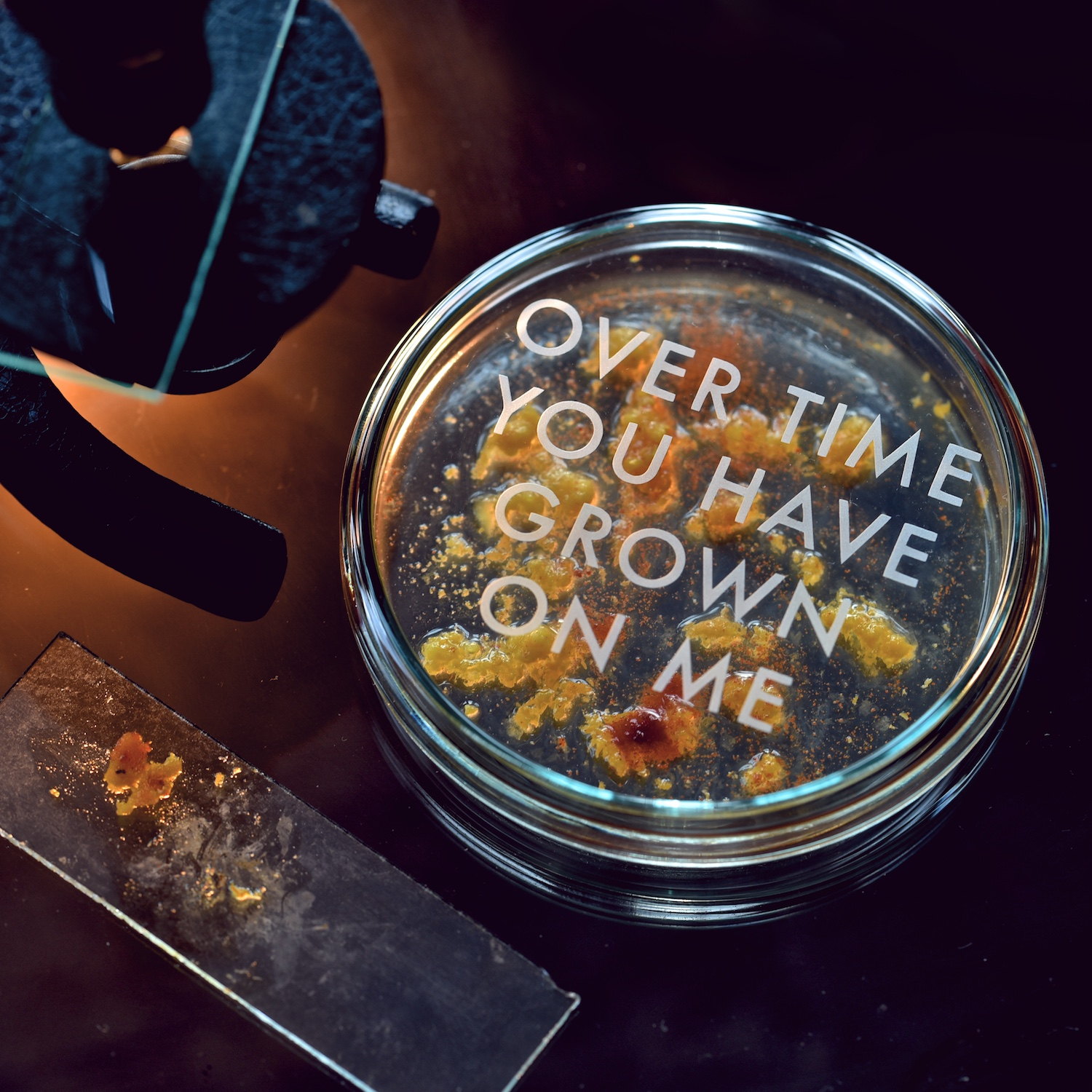 over-time-you-have-grown-on-me-etched-petri-dish-vinegar-and-brown-paper.jpg