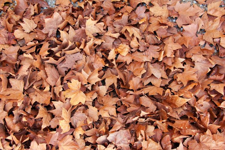 autumn+leaves.jpg