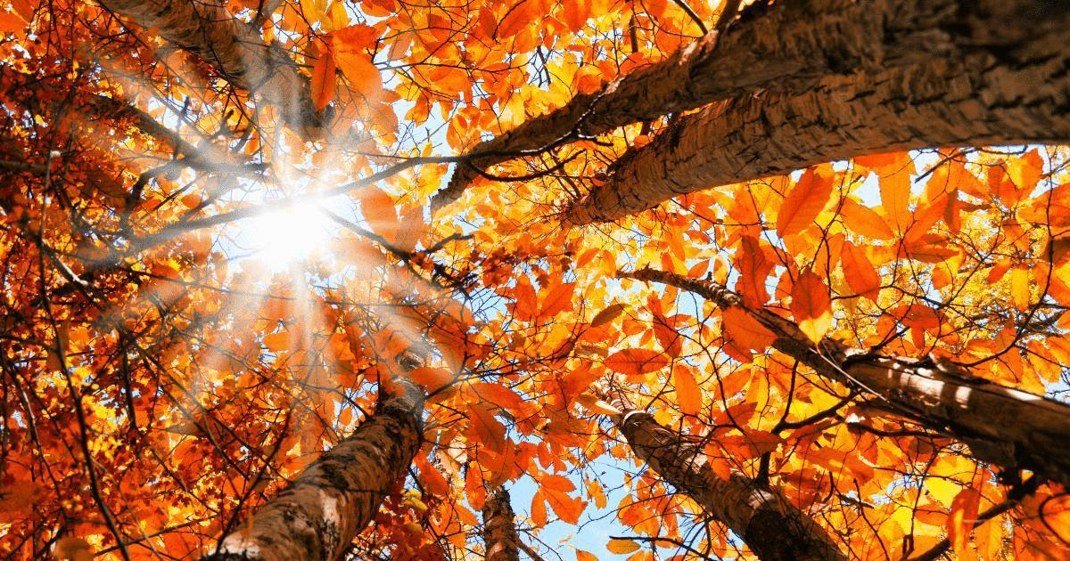 autumn-leaves-equinox.jpg