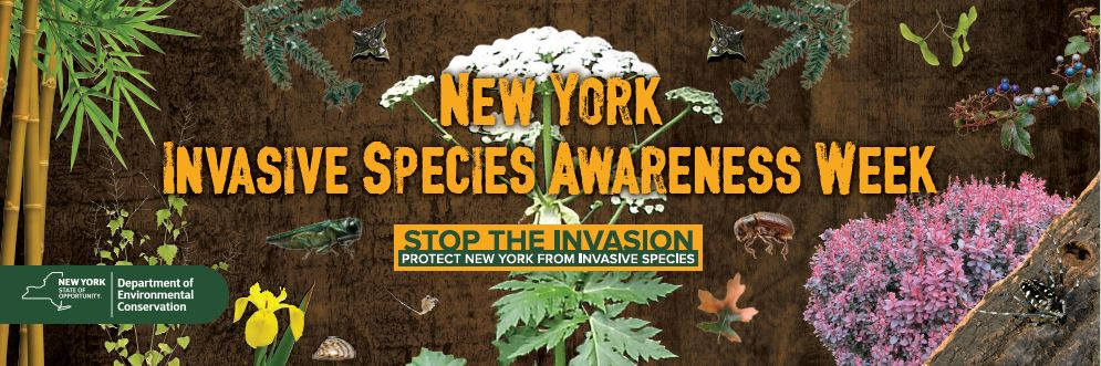 "New York State Invasive Species Awareness Week ""Early Detection: Explore, Observe, Report"" July 7-13"