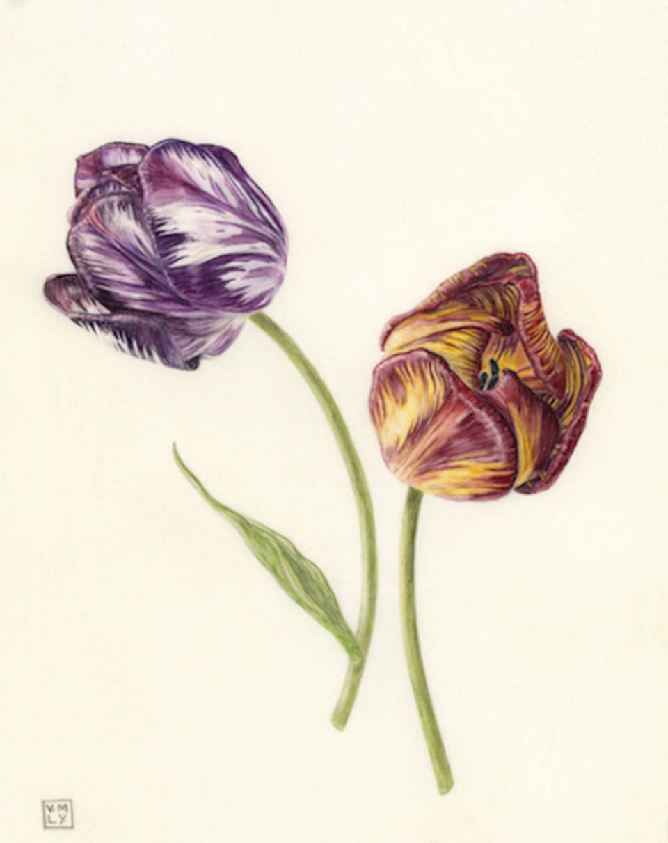 Wakefield Tulips, Flames