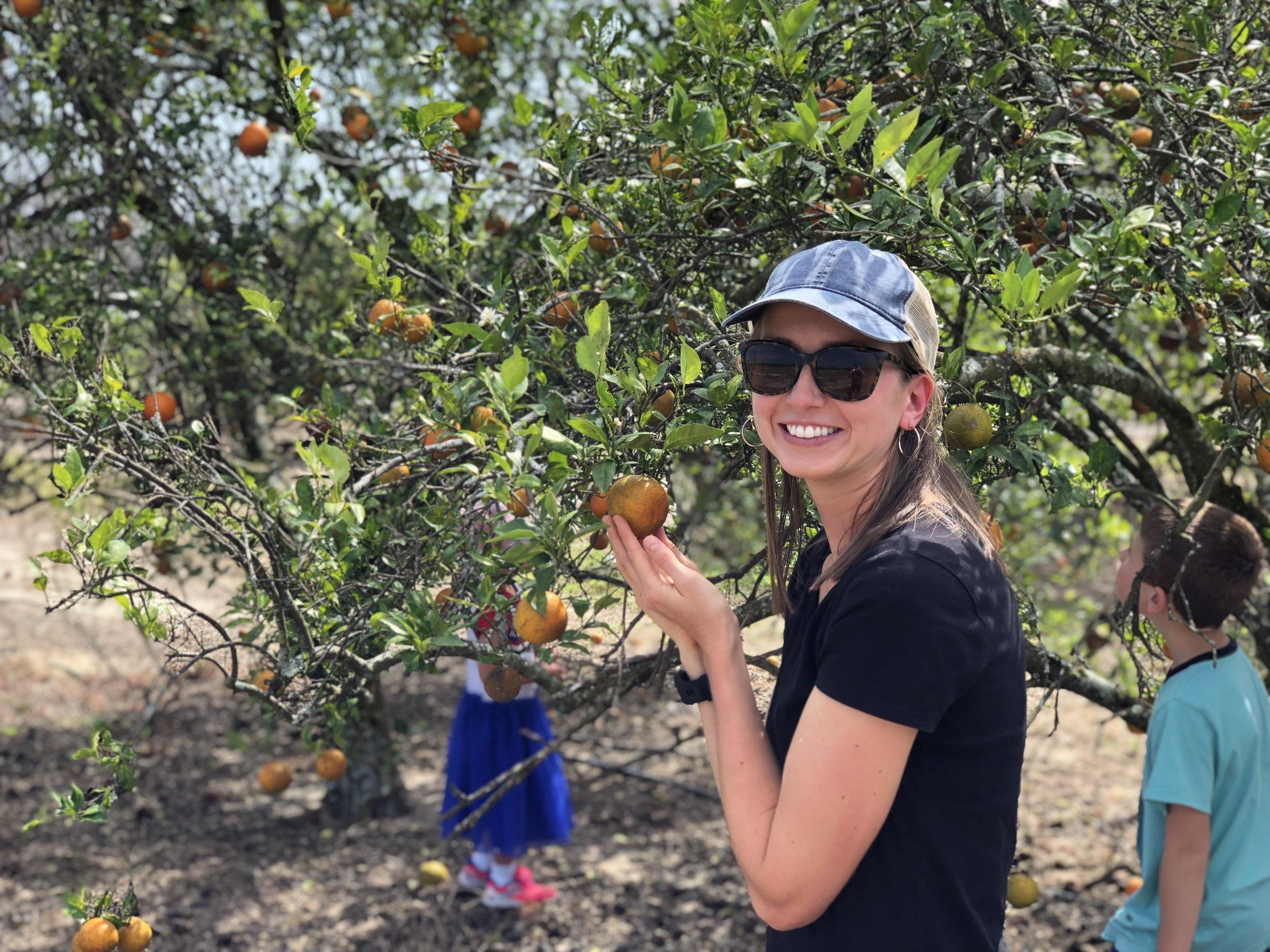 Temple Oranges.JPG