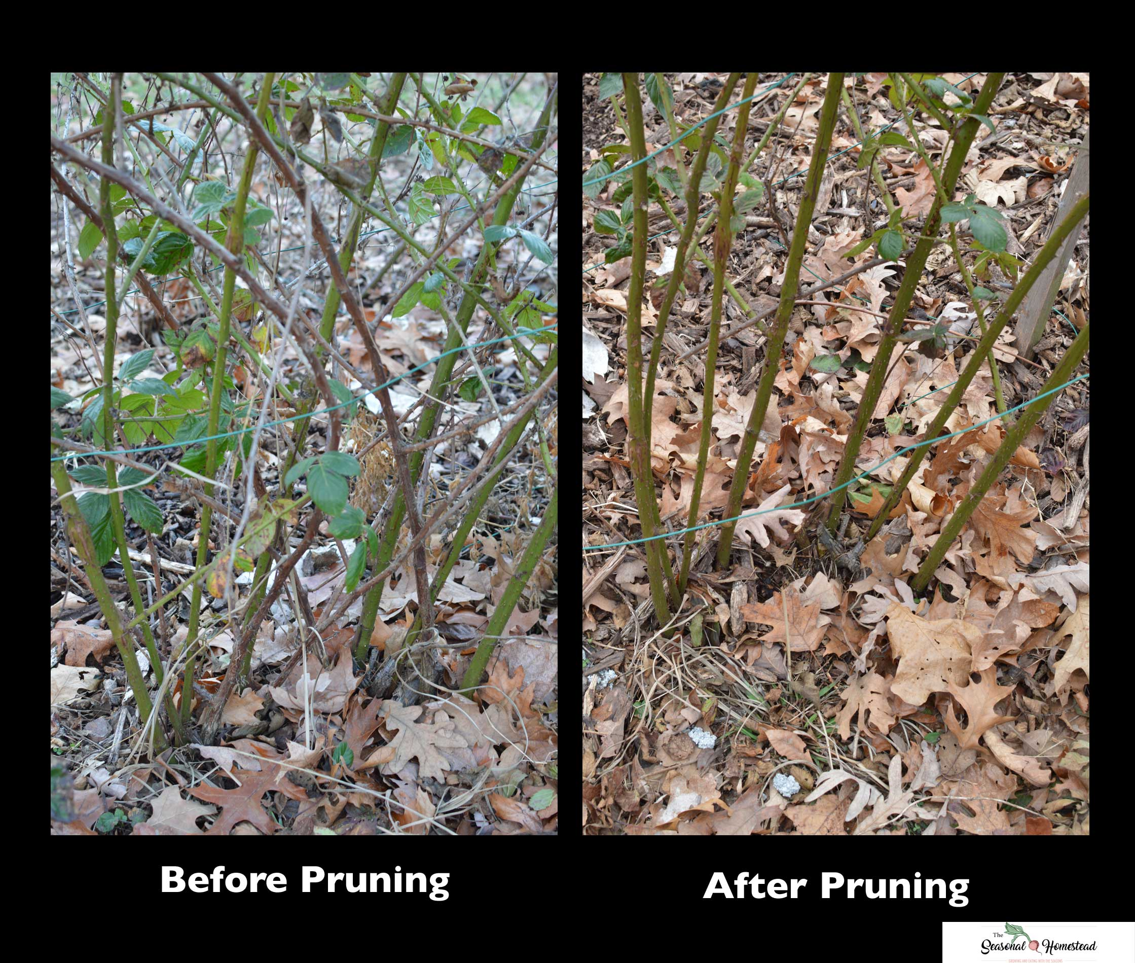 Before-and-After-Pruning-Garden.jpg