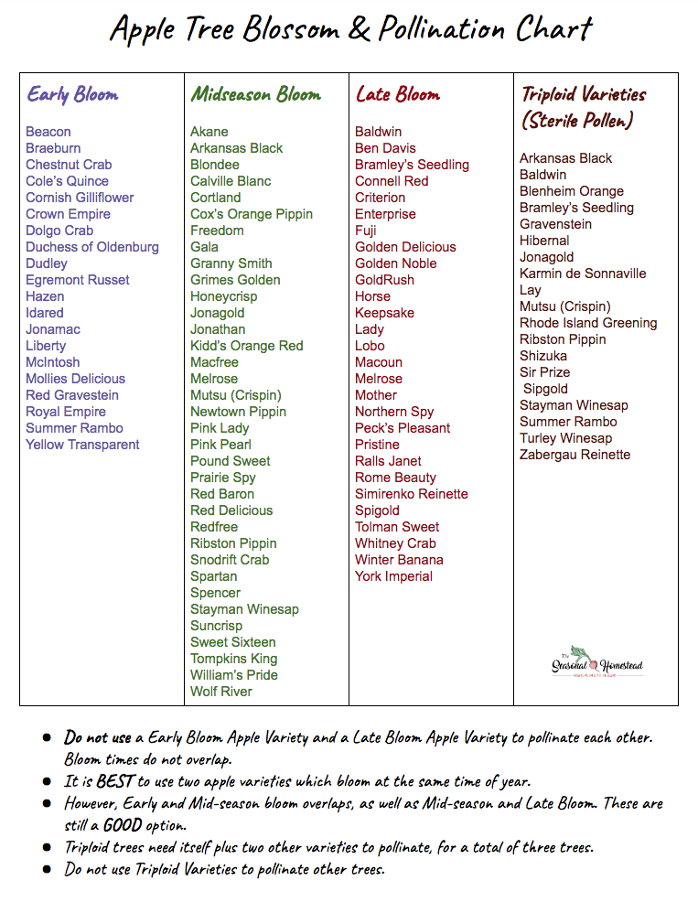 Apple Tree Blossom and Pollination Chart.png