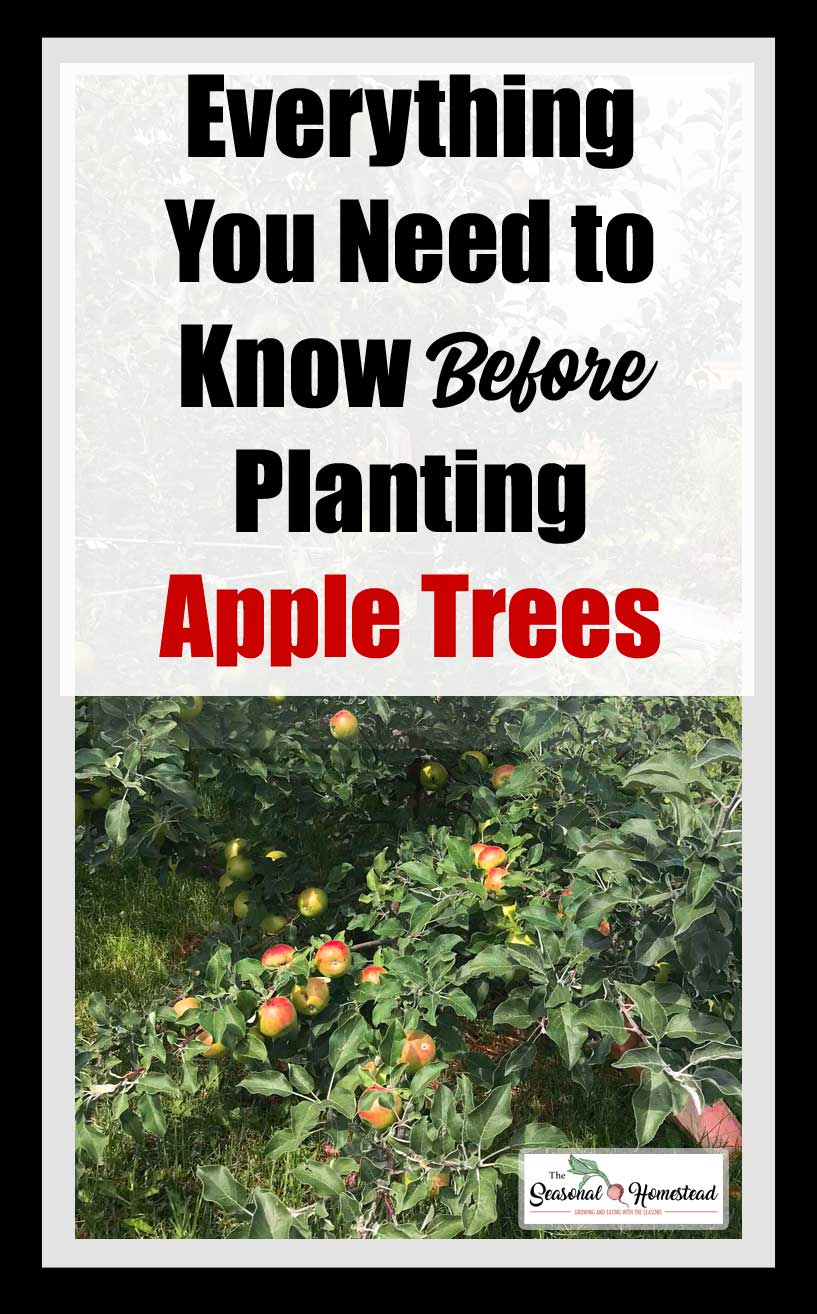 Before-Planting-Apple-Trees-Pin.jpg