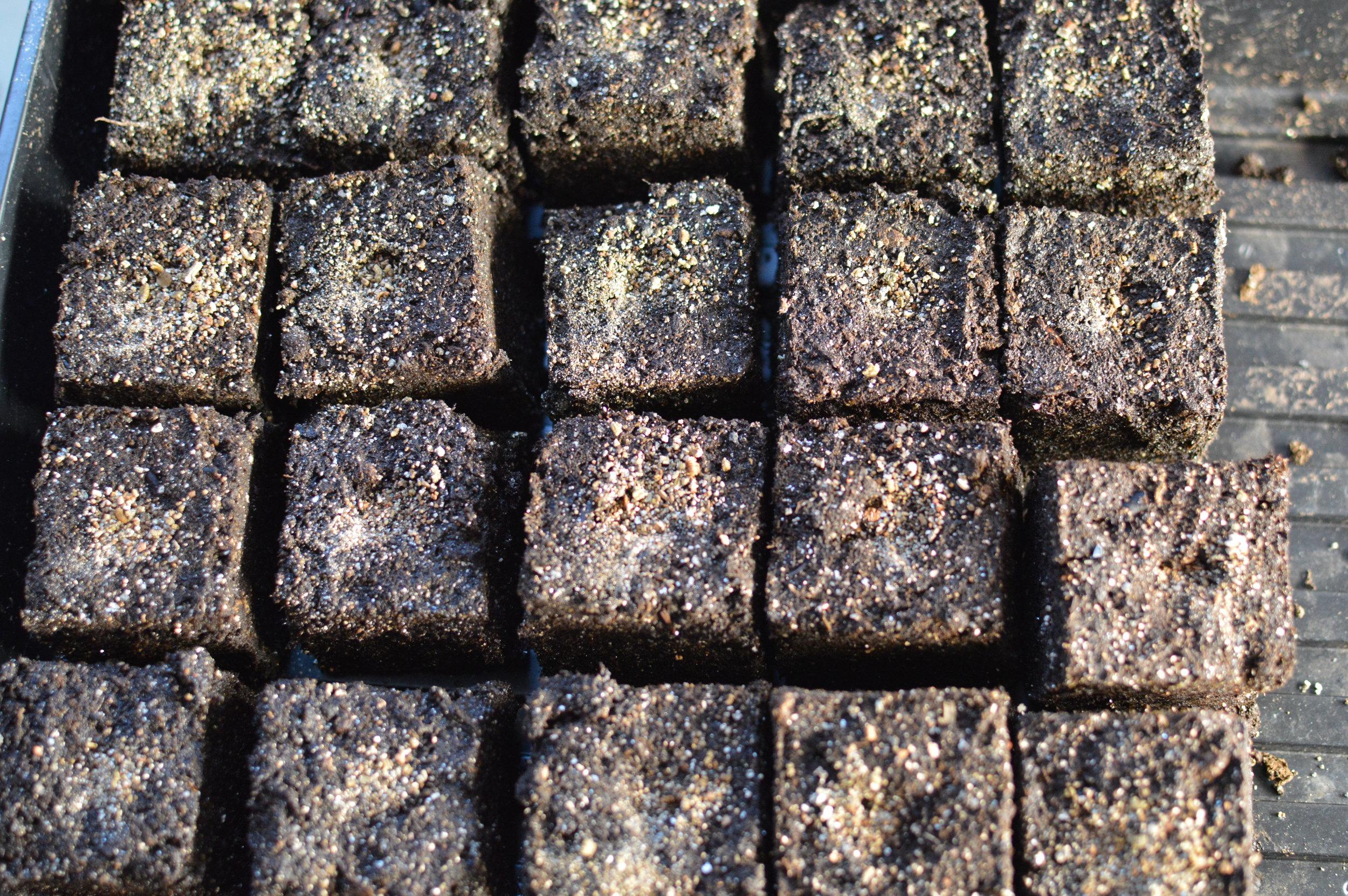 Soil Block Seed Start.JPG