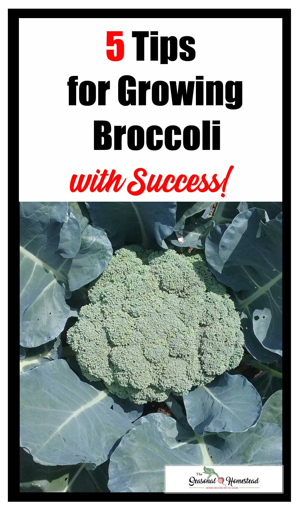 5-Tips-for-Growing-Broccoli-with-Success.jpg