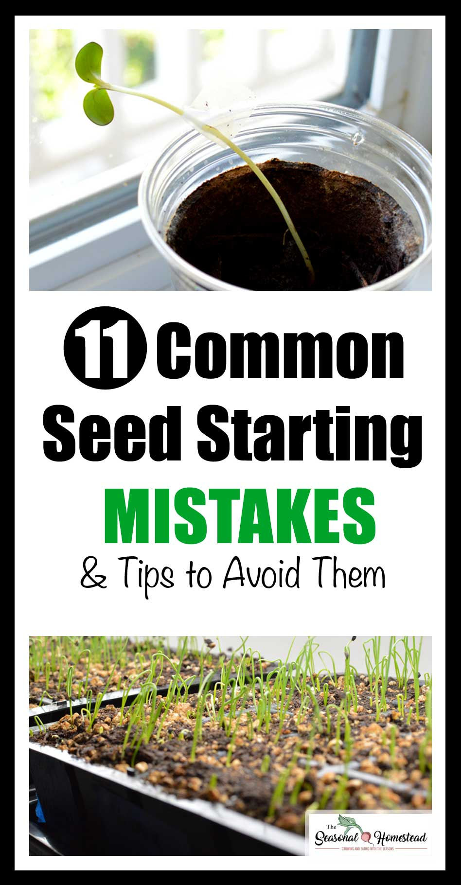 11-Seed-Starting-Mistakes-and-tips-to-avoid-them.jpg
