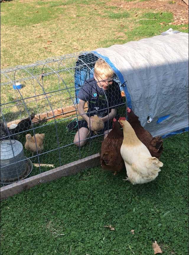 Chicken-Tractor.jpg