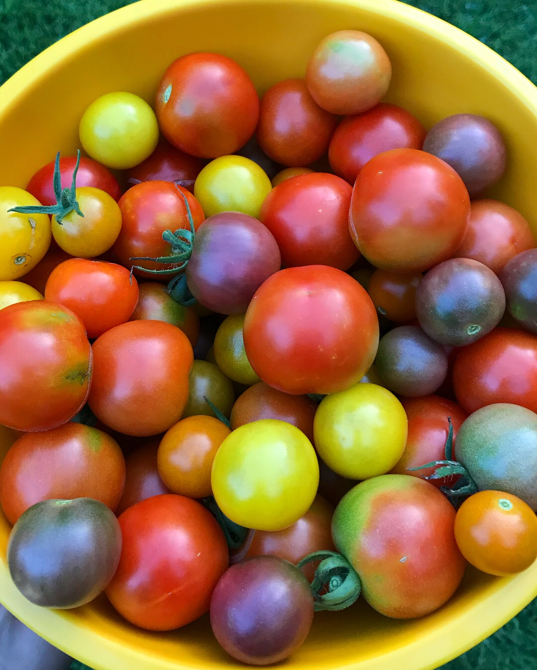 Homegrown Tomatoes.JPG