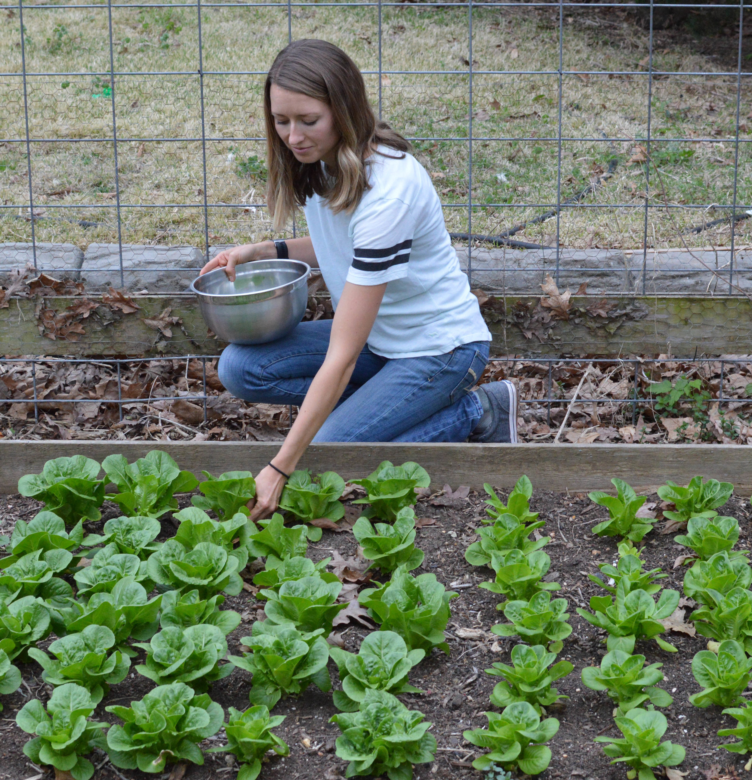 Picking Homegrown Lettuce from the Garden.jpg