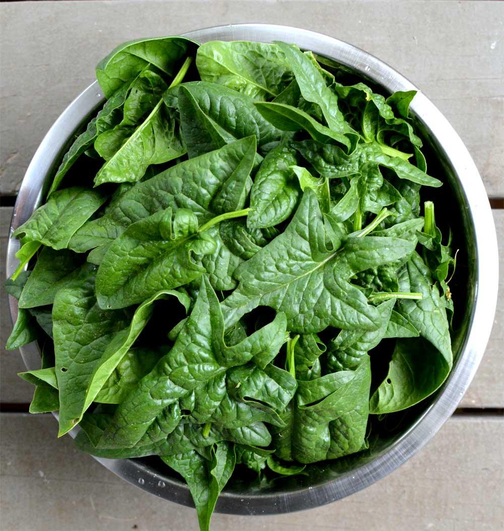 Spinach-Harvest.jpg