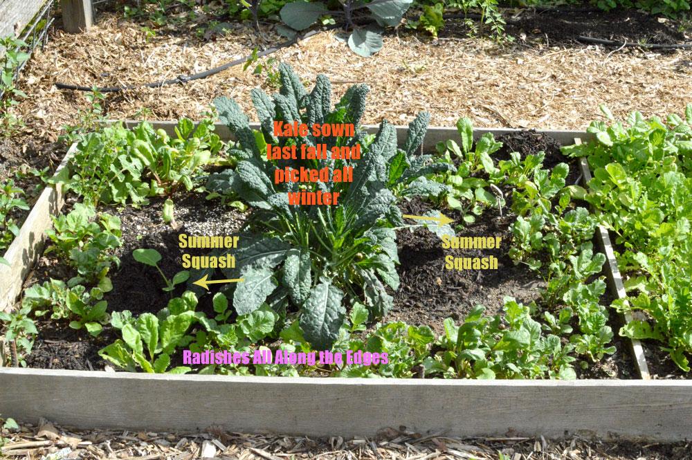 Succession-Planting.jpg