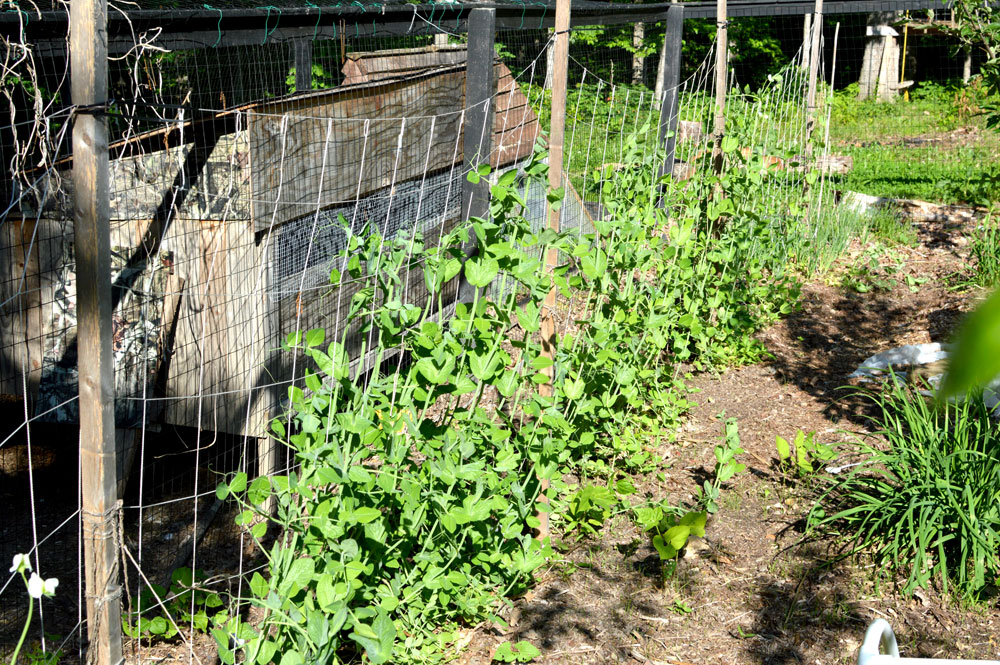 Snap Pea Trellis is just netting on a wood Frame