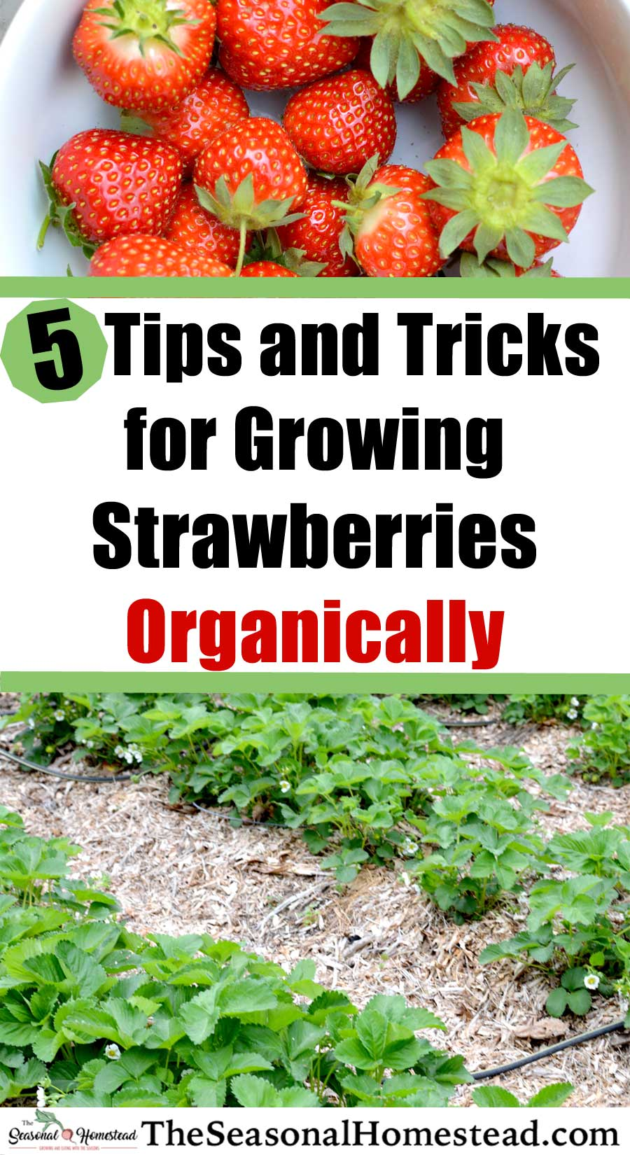 5-Tips-and-Tricks-StrawberriesPin.jpg