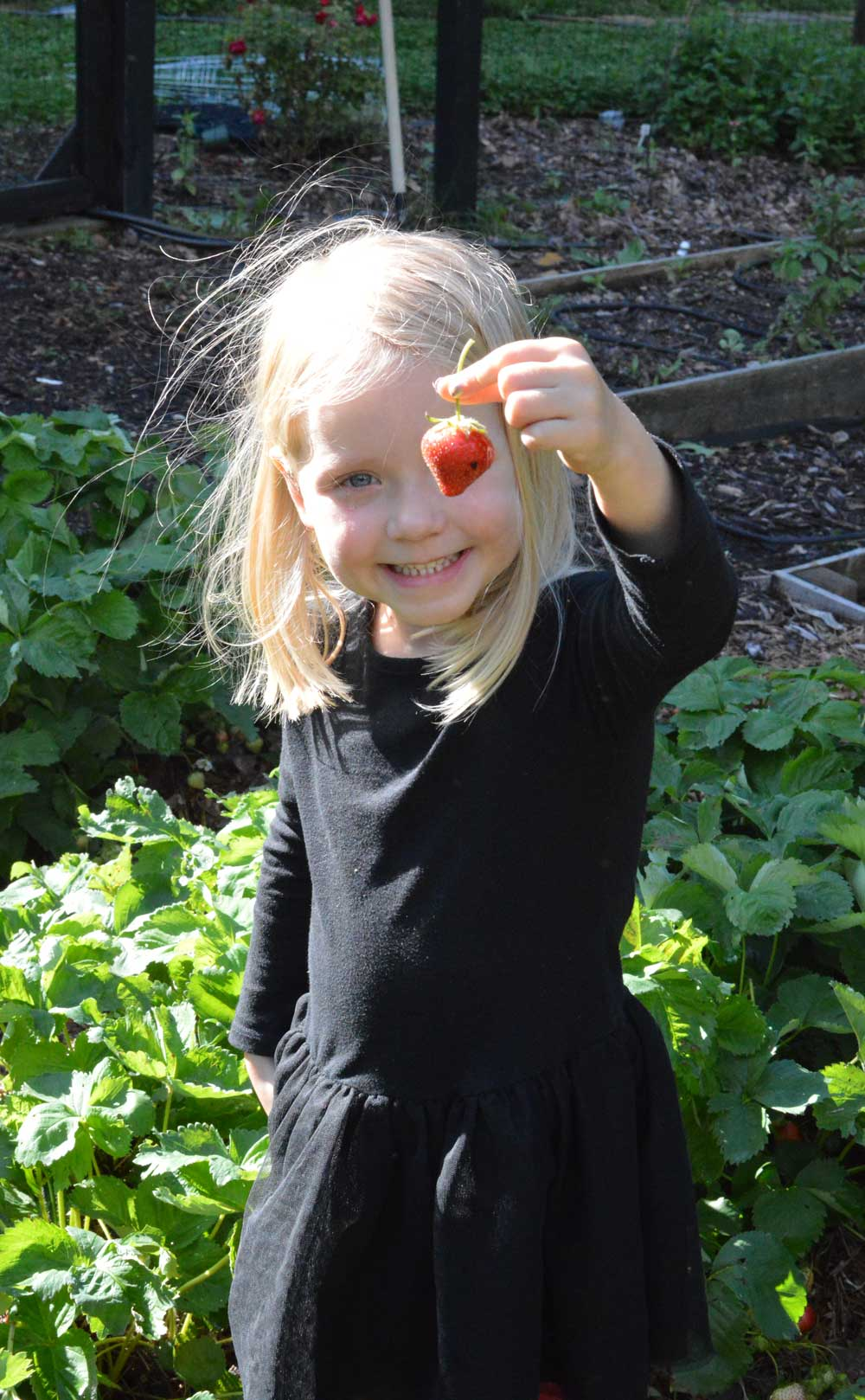 Strawberry-Patch.jpg
