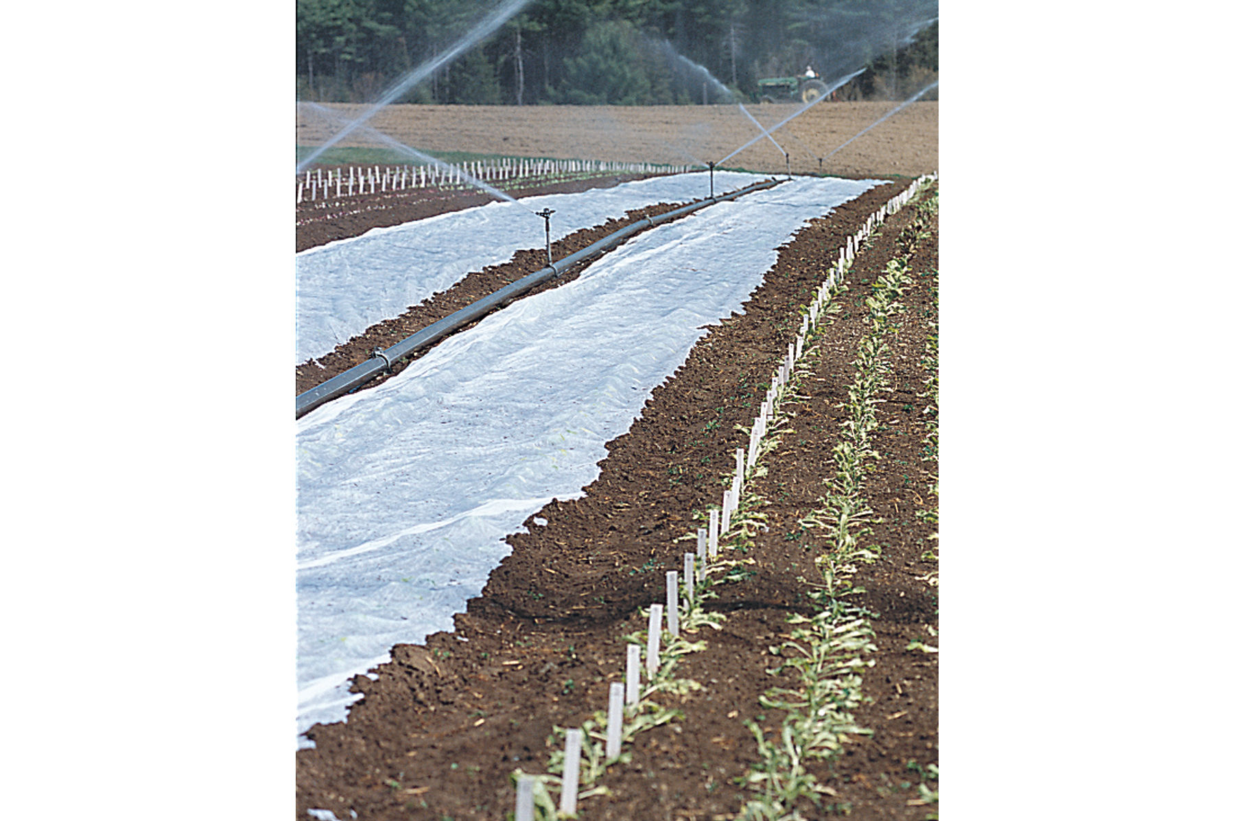 Agribon 19 Row Cover.jpg