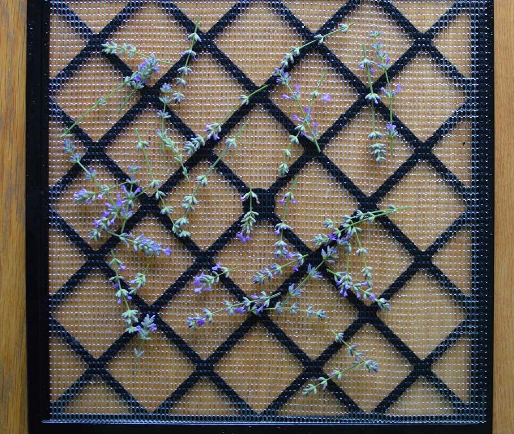 Lavender On Dehydrator Trays