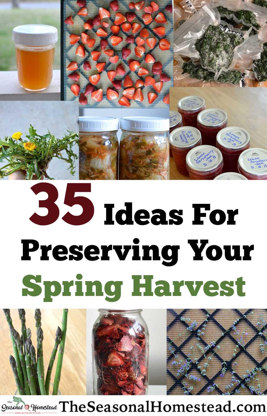 35-Ideas-for-Preserving-Your-Spring-Harvest.jpg