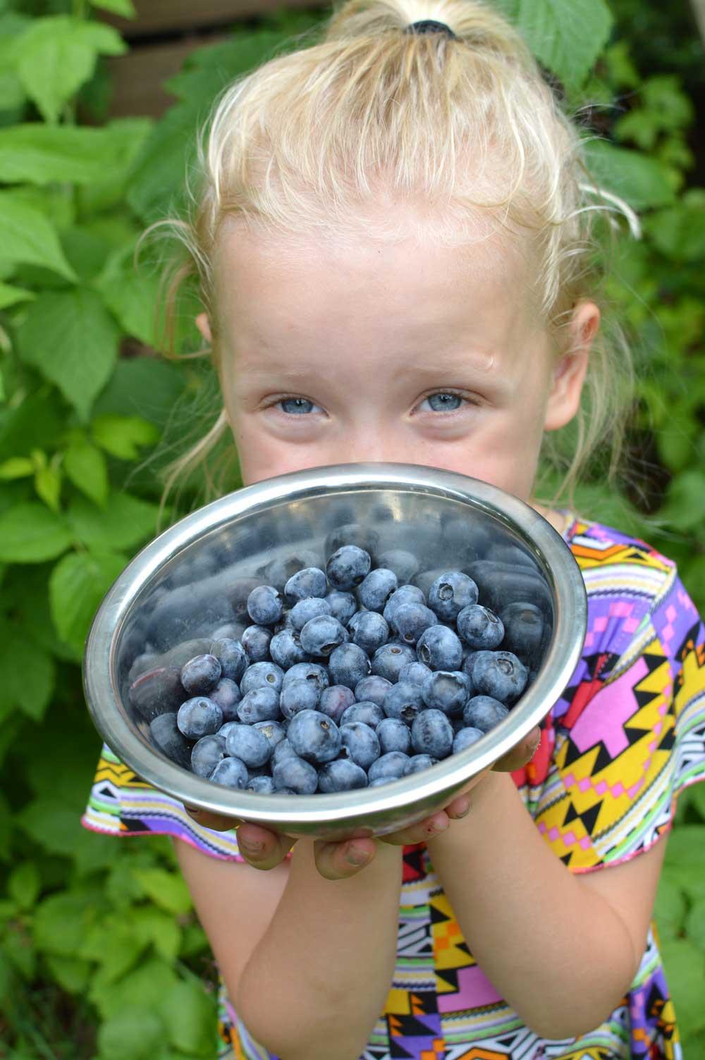 Blueberries2019.jpg