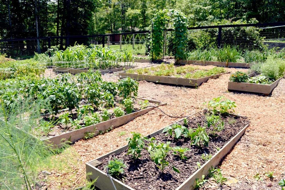 My Garden 2019