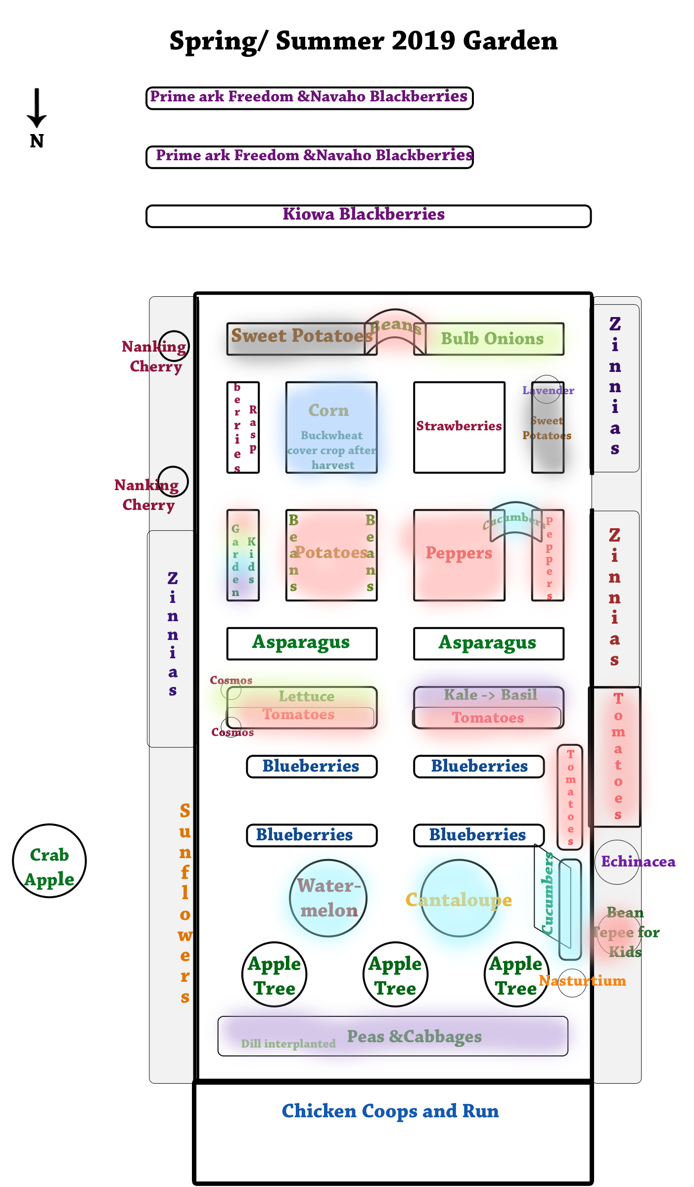 Garden-Plan--Spring-and-Summer-2019 Crop Rotation Colors.png