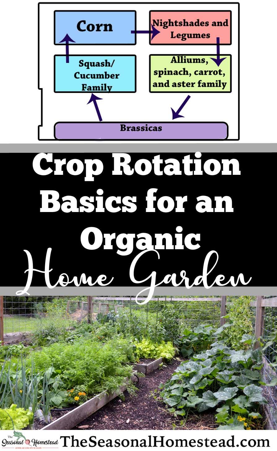 Crop-Rotation-Basics-for-an-Organic-Home-Garden.jpg