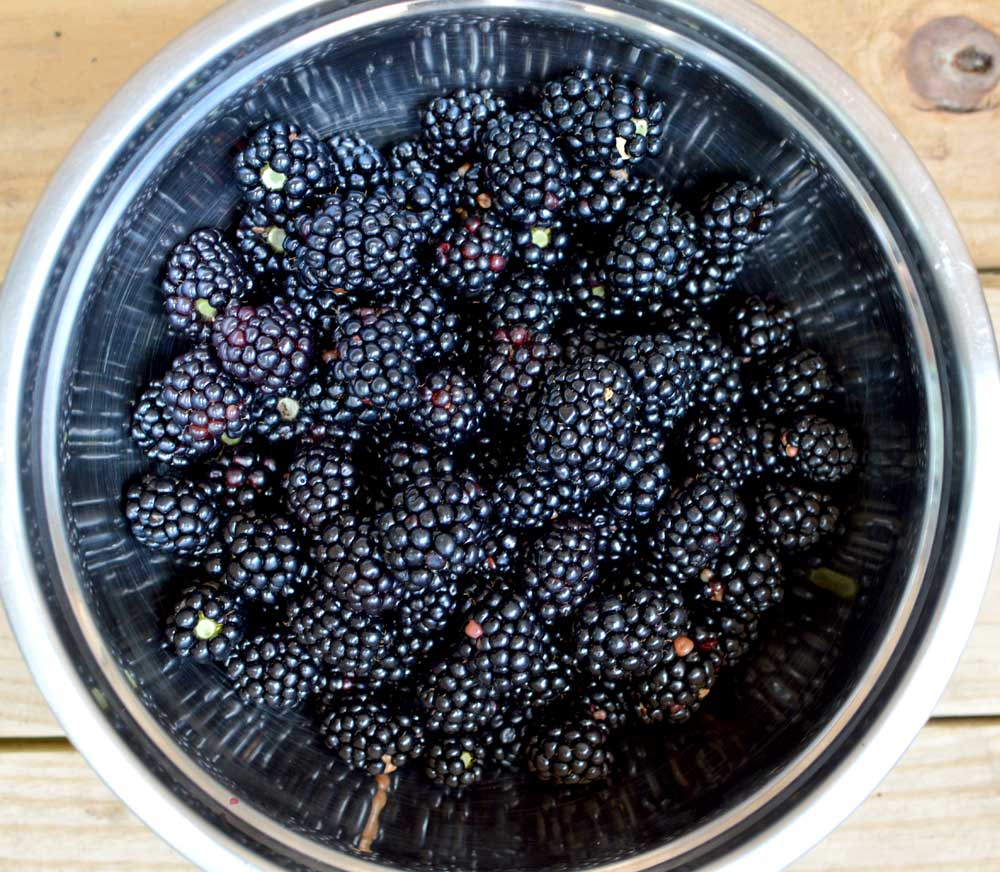 Blackberry-bowl.jpg