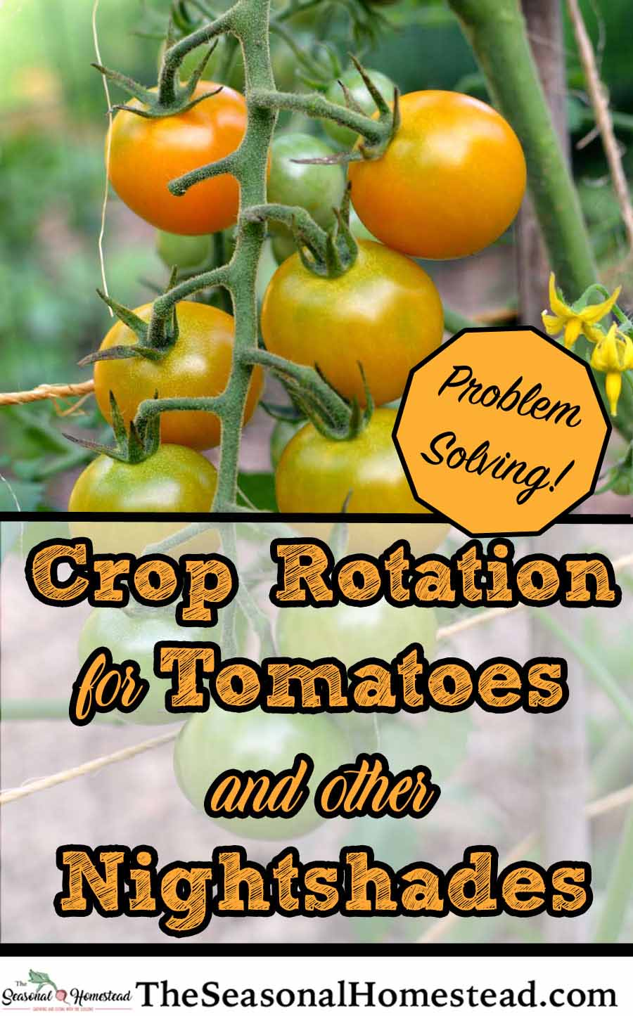 Crop-Rotation-for-Tomatoes-and-other-NightShades-problem-solving.jpg