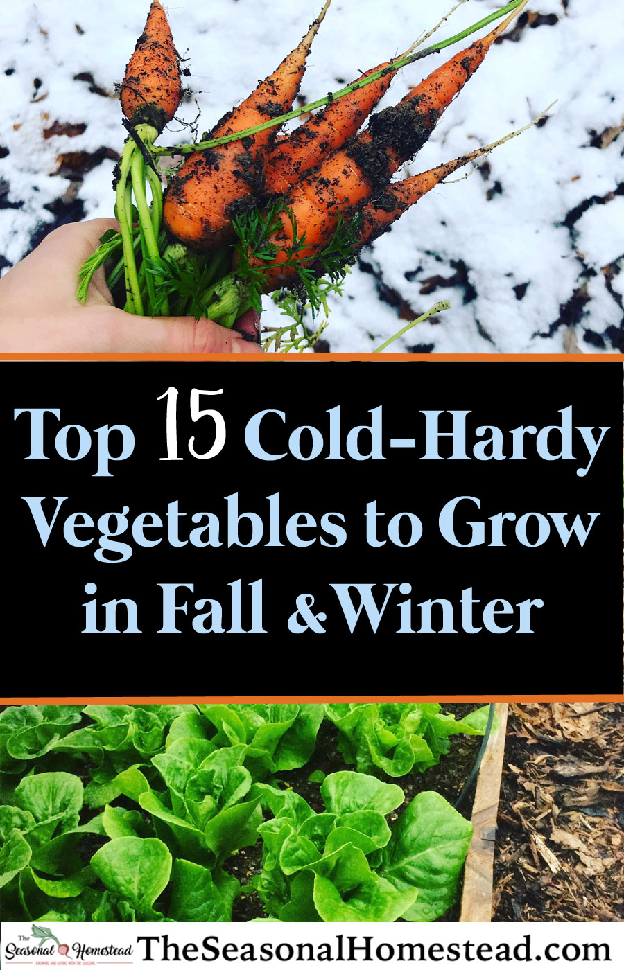 Top-15-Cold-Hardy-Vegetables-to-Grow-in-Fall-and-Winter.jpg