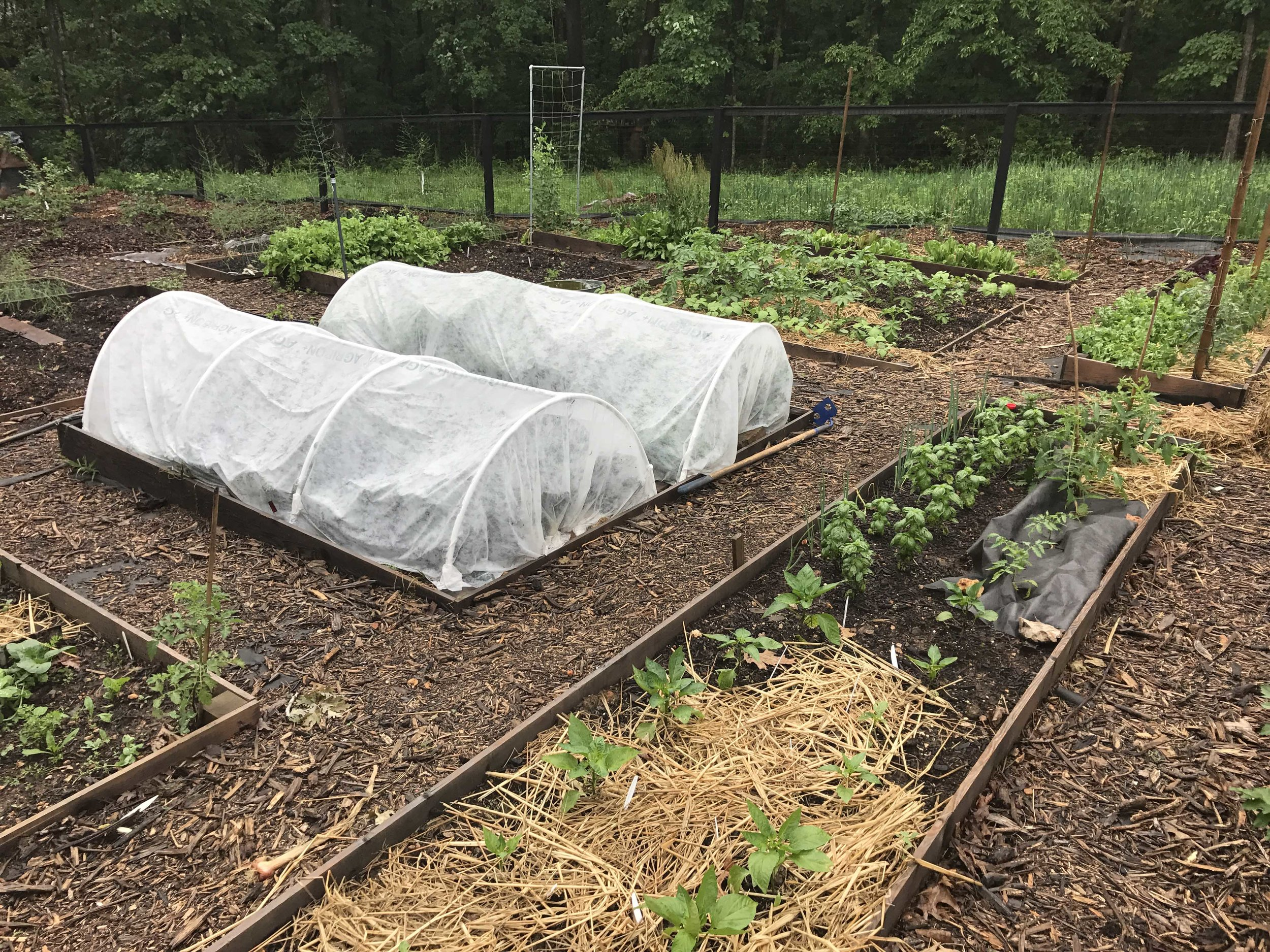 Row Cover on Low tunnels