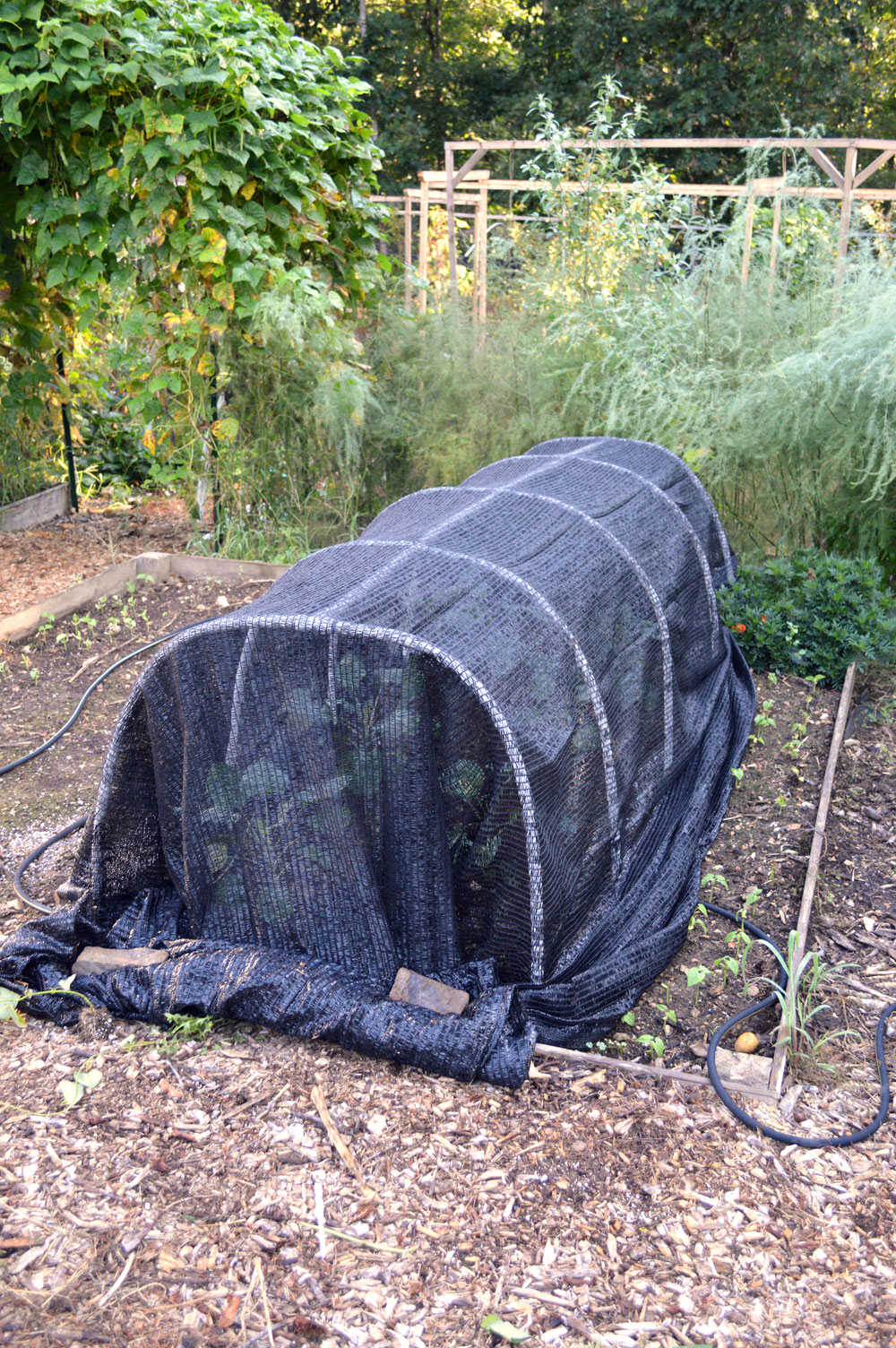 Shade Cloth on Low tunnel